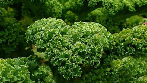 Ventajas de comer kale en el embarazo