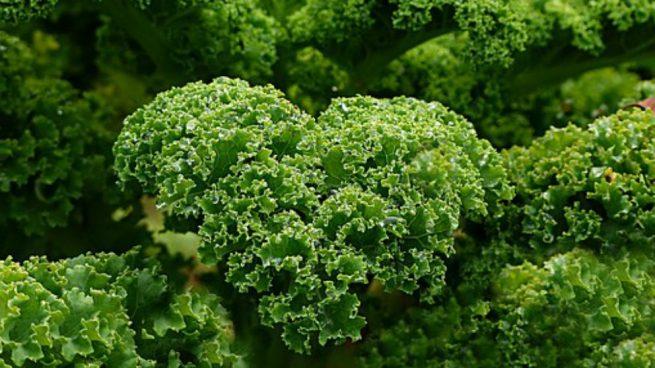"""Resultado de imagen para mejores maneras de tomar kale"""""""