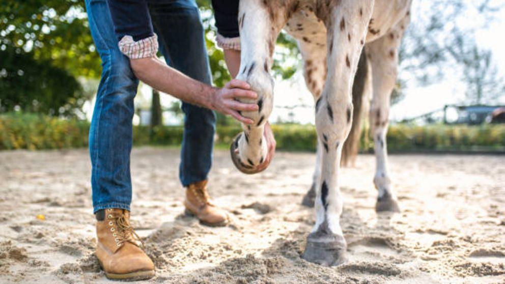 Todos los pasos para saber cómo tratar la cojera en caballos