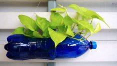 Guía de pasos e ideas para poder hacer macetas recicladas
