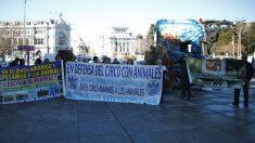 Manifestación contra los circos de animales