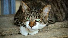 Aprende los pasos para saber cómo domesticar un gato