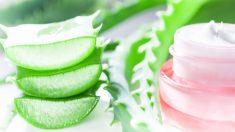 Todos los pasos para saber cómo hacer crema de aloe vera y rosa mosqueta