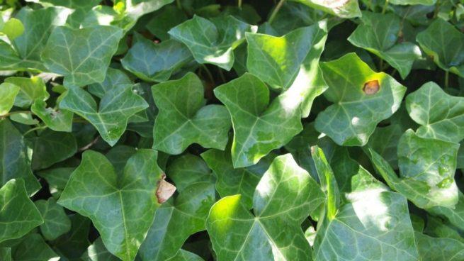 plantas que crecen más rápido que las demás