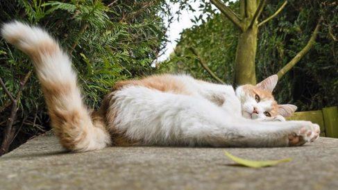 En general, la cola de los gatos es bastante flexible.