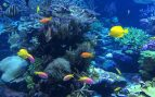 agua beben los animales de mar