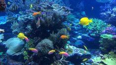 Descubre qué agua beben los animales de mar