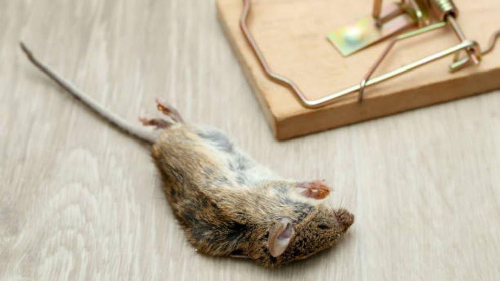 Trampas de presión para ratones