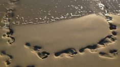 Descubre cómo la arena sirve para purificar el agua