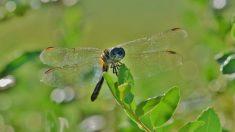 Descubre por qué no se rompen las alas de los insectos