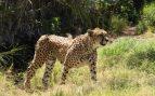 mamíferos más rápidos de la Tierra