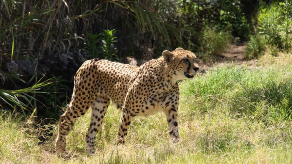 Los mamíferos más rápidos de la Tierra