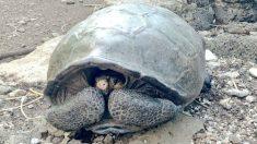 Tortuga gigante. Foto: Europa Press