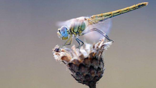respiran los insecto