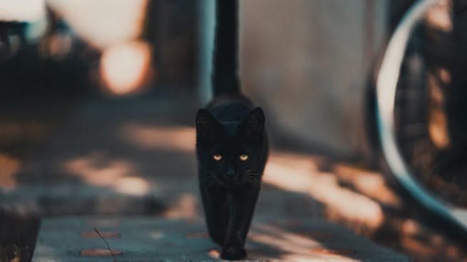 cola-gatos
