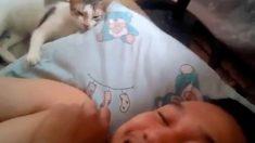 La reacción de un gato frente a los cánticos de su dueño triunfa en Facebook