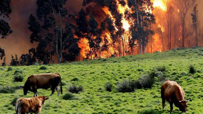 Asturias registró 347 incendios forestales en cinco días y más de 30 siguen aún activos