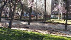 Árboles en peligro en Moratalaz, en la avenida Dr. García Tapias.