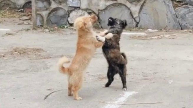 El baile de los perros mueve Facebook