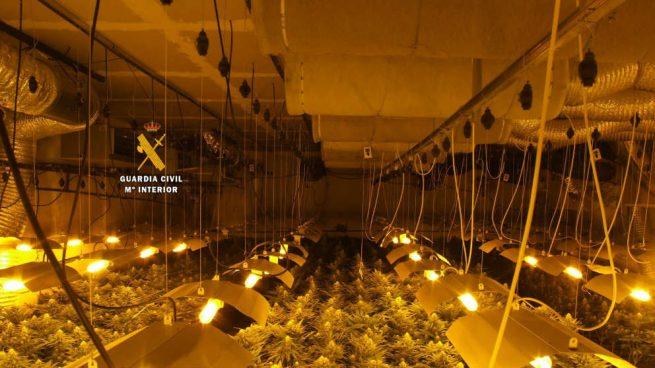 La Guardia Civil desmantela una plantación de marihuana en una nave industrial de Ronda