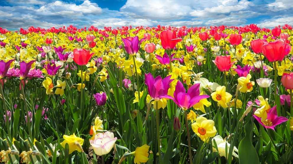 La primavera 2019 comenzará el 20 de marzo a las 2258 horas hora peninsular