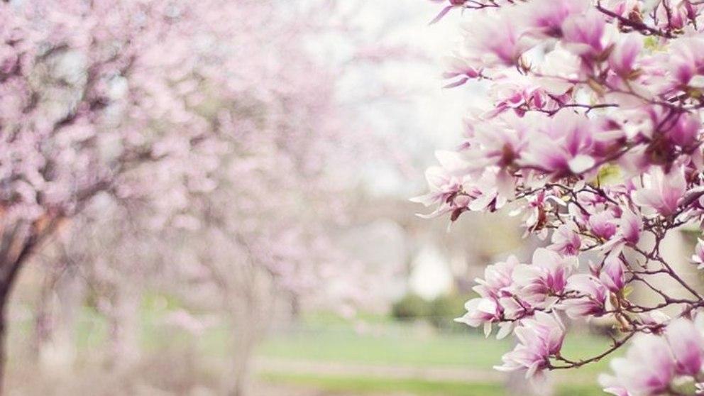 La primavera es una de las estaciones del año más homenajeadas a nivel global.