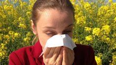En primavera, la alergia al polen es una de las enfermedades más frecuentes.