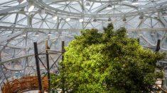 Sede de Amazon en Seattle