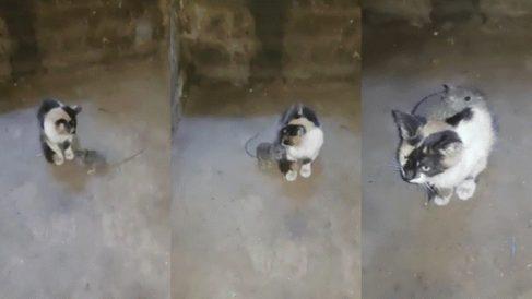 Un gato y un ratón unidos en Facebook