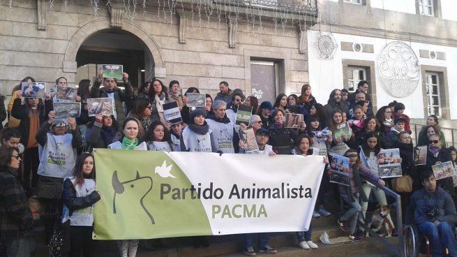 PACMA recuerda que «Iglesias prometió un referéndum sobre los toros» y exige que lo cumpla