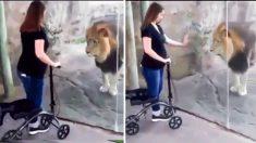 Un fiero león se convierte en un gatito en Facebook