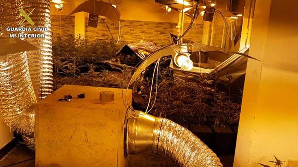 Plantación de Marihuana desmantelada por la Guardia Civil. Foto: Europa Press