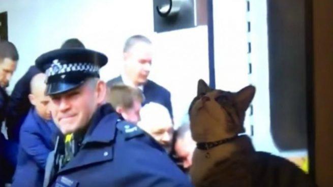 El gato de Julian Assange publica un vídeo en Facebook
