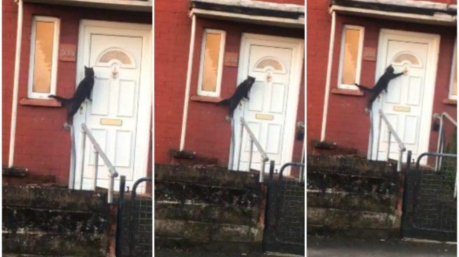 Un gato llama a la puerta y sorprende Facebook