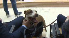 El perro maltratado citado como testigo por un juez