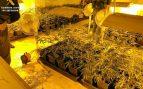 Plantación de marihuana desmantelada por la Guardia Civil en otra operación.