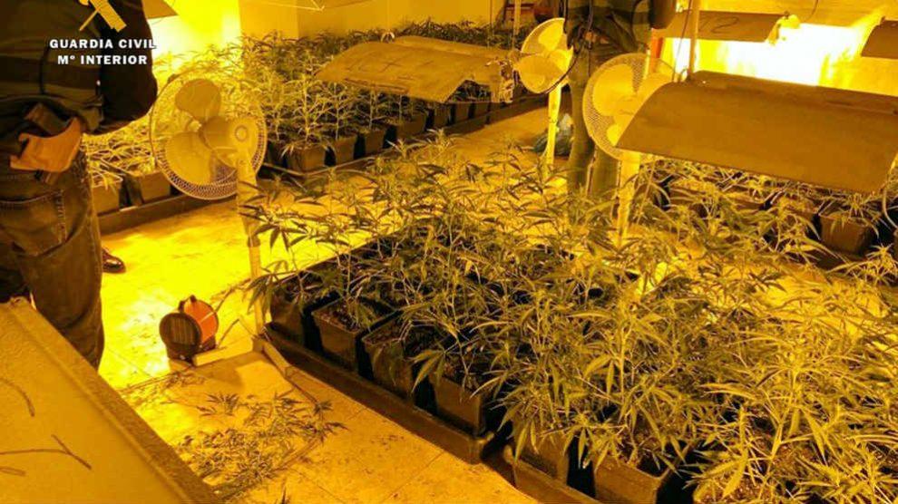 Plantación de marihuana desmantelada por la Guardia Civil.