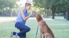 Todos los pasos para adiestrar un perro adulto
