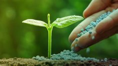 Los fertilizantes pueden suponer un gran problema para el medio ambiente