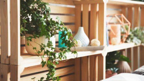 Guía de pasos para saber cómo hacer un estante para las plantas