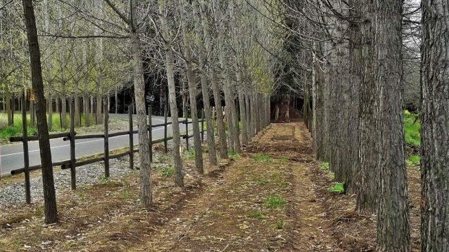 Especies de árboles
