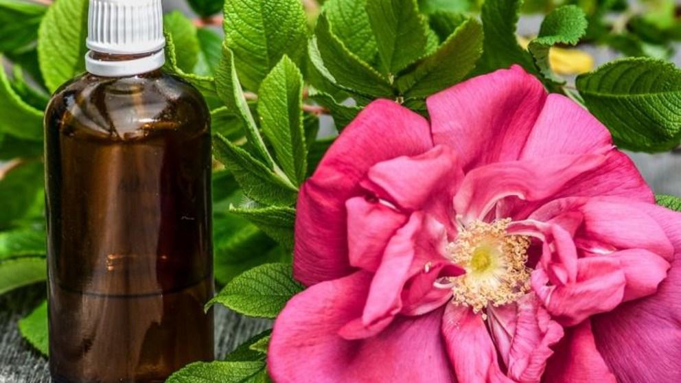 El llamado oro líquido o el aceite de argán tiene un doble uso.