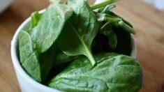 Para conservar bien los alimentos y especialmente en épocas calurosas, debemos dejar los alimentos en el frigorífico.