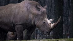 Se estima que apenas quedan 63 especies en todo el mundo.