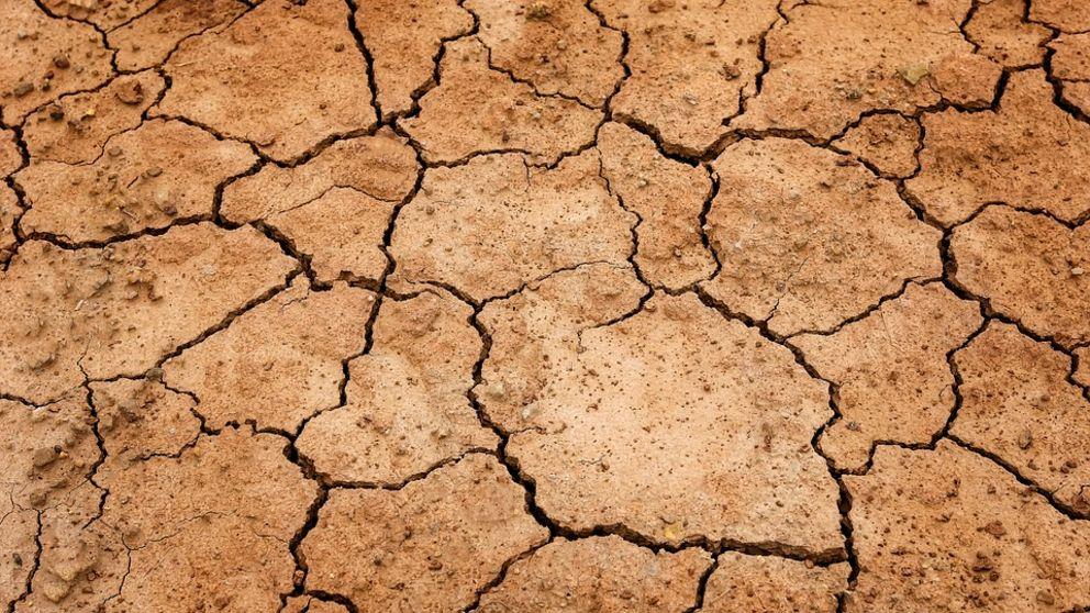 Acuerdo de colaboración para frenar la enfermedad 'la seca' en los montes y dehesas de España.