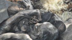 Los animales también se cortejan, y en algunos casos de formas muy curiosas