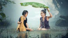 La lluvia tiene un olor muy característico que todos relacionamos con esa inclemencia metereológica