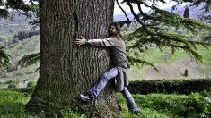 Los beneficios de abrazar un árbol son muy interesantes