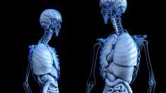Descubre qué es el osteoide