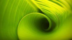 Descubre tipos de fotosíntesis